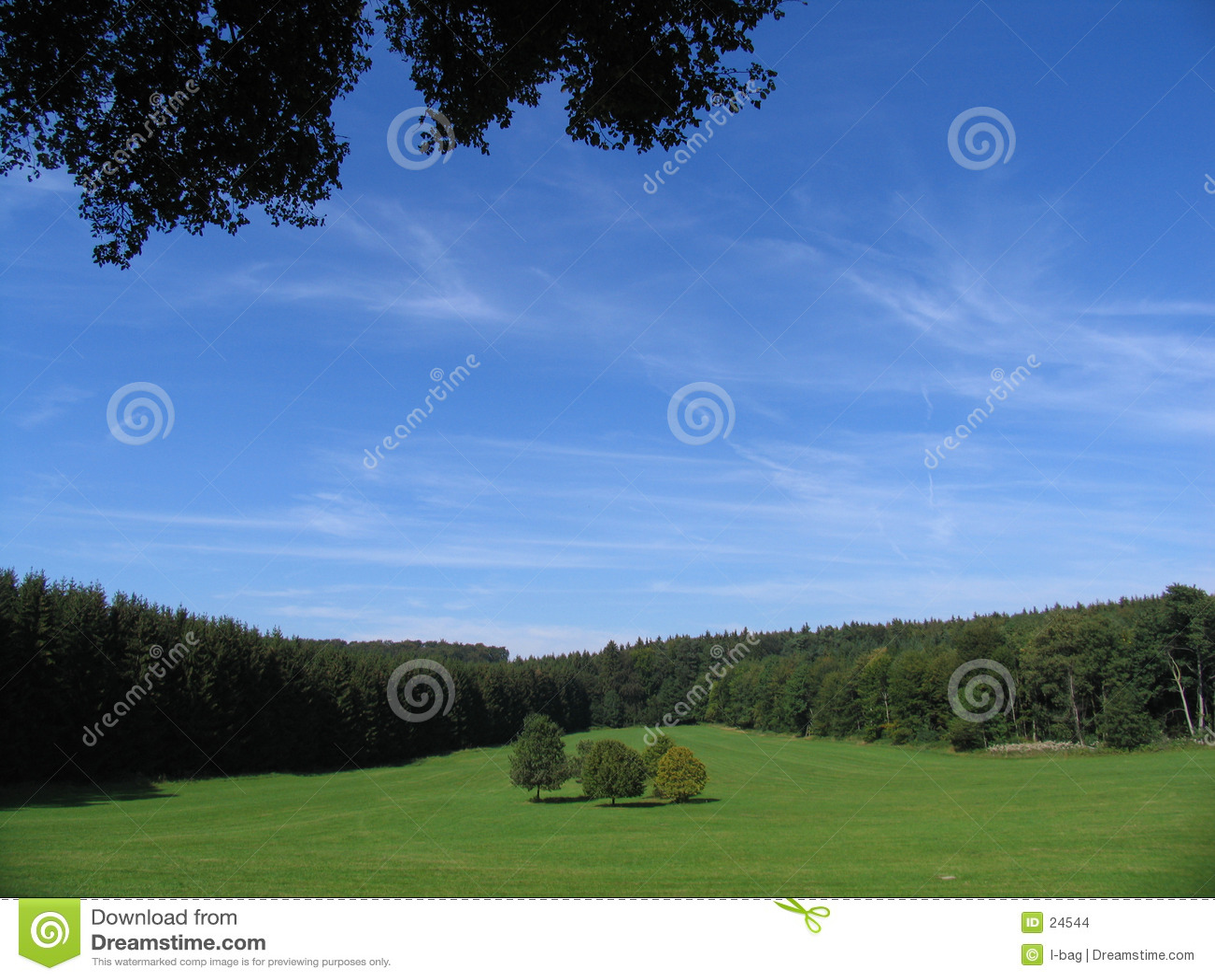 5 arbres entourés par la forêt