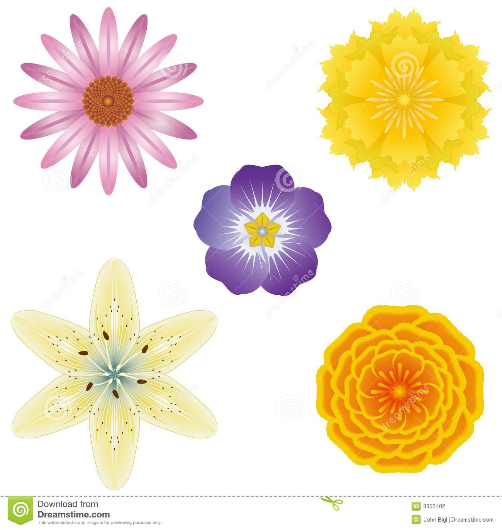 5 ilustrações da flor