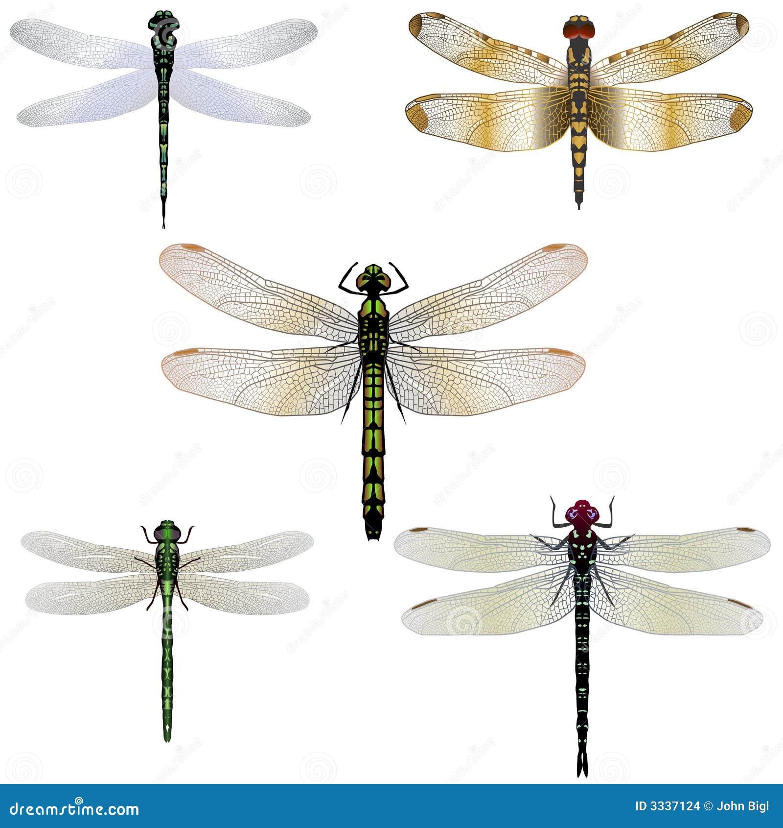 5 libélulas