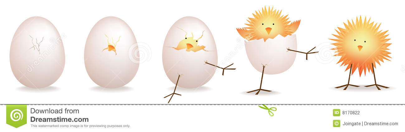 5 stages of chick  baby bird hatching stock photography baby chick clip art black white baby chicks clip art or svg