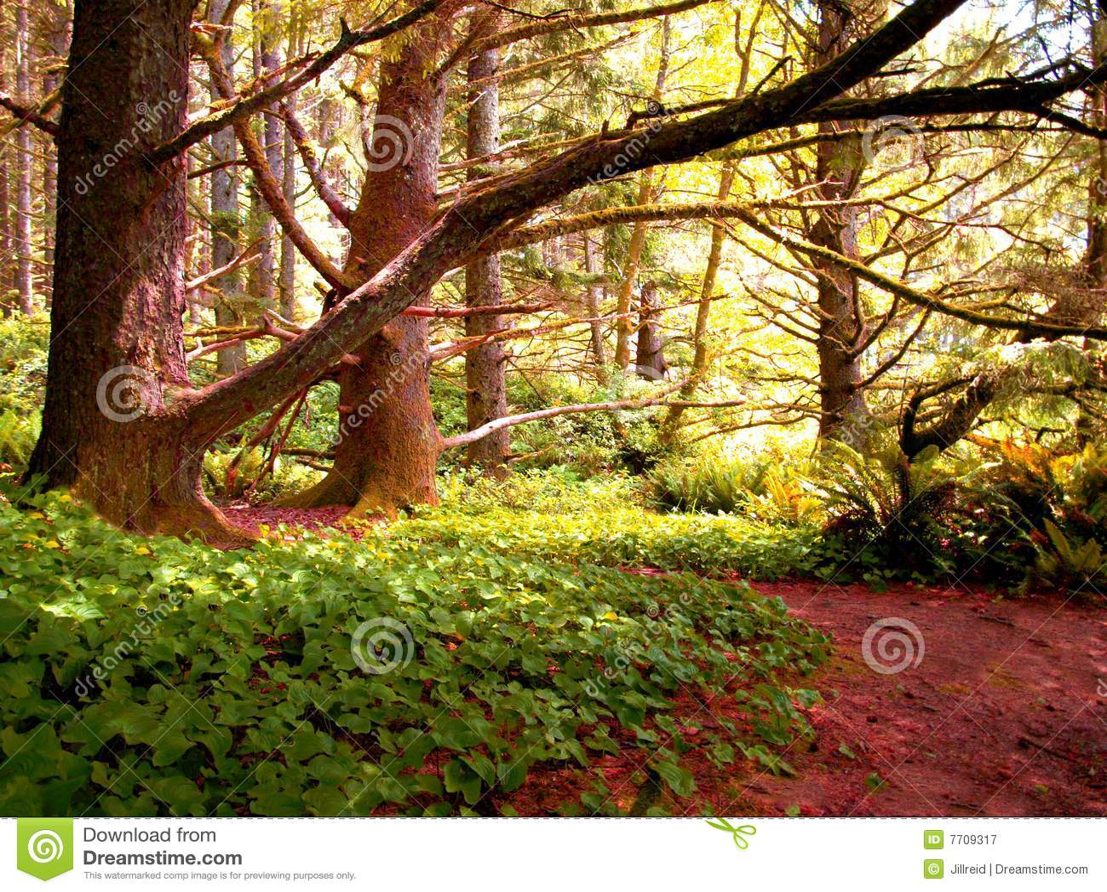 530b ζωηρόχρωμα δέντρα κισσών