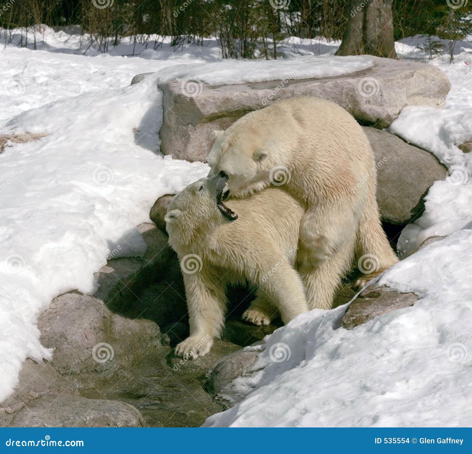 Download 6热情拥抱 库存照片. 图片 包括有 冬天, 敲打, 加拿大, 食肉动物, 本质, 联接, 空白, 野生生物 - 535554
