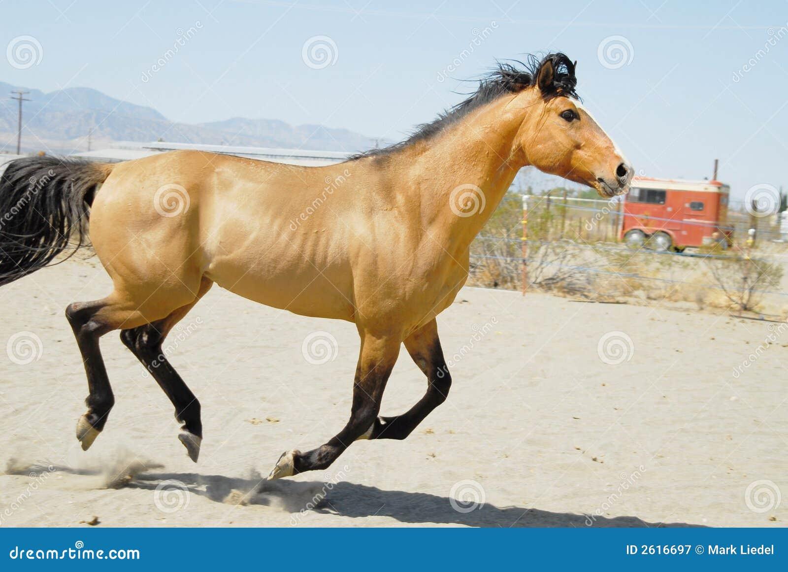 6 konia