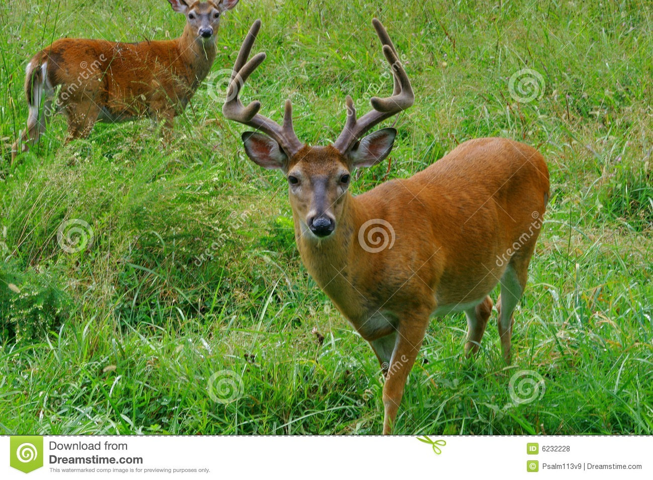 8 Point Buck White Tail Deer Stock Photo Image Of Brown White