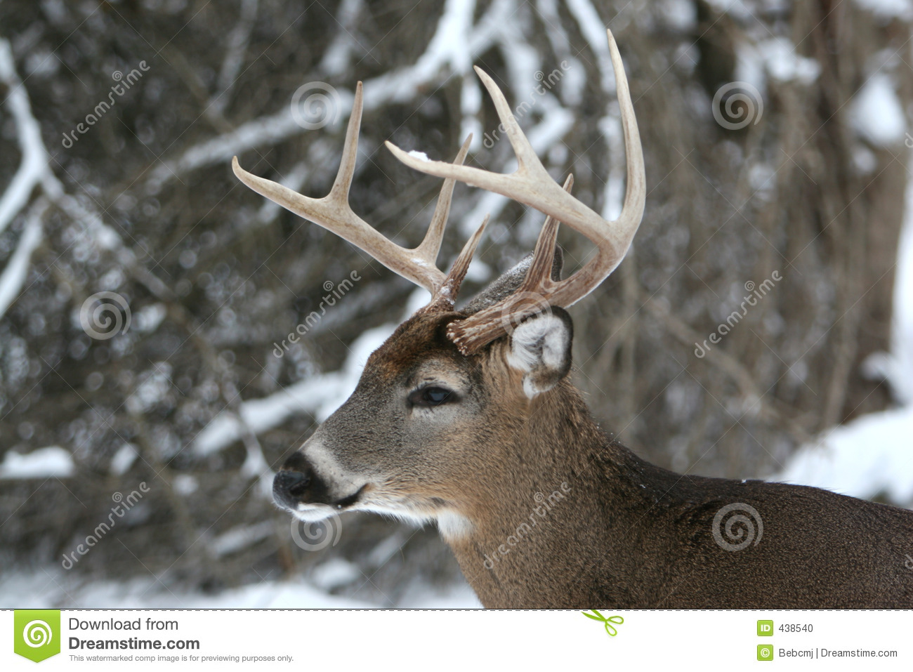 Big Whitetail Bucks In Snow | www.pixshark.com - Images ...