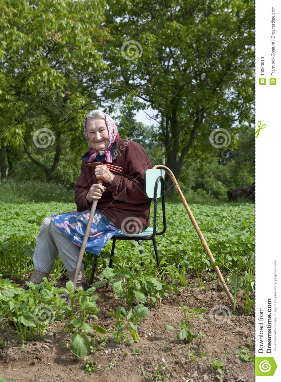 82 years old woman working in field stock photo image