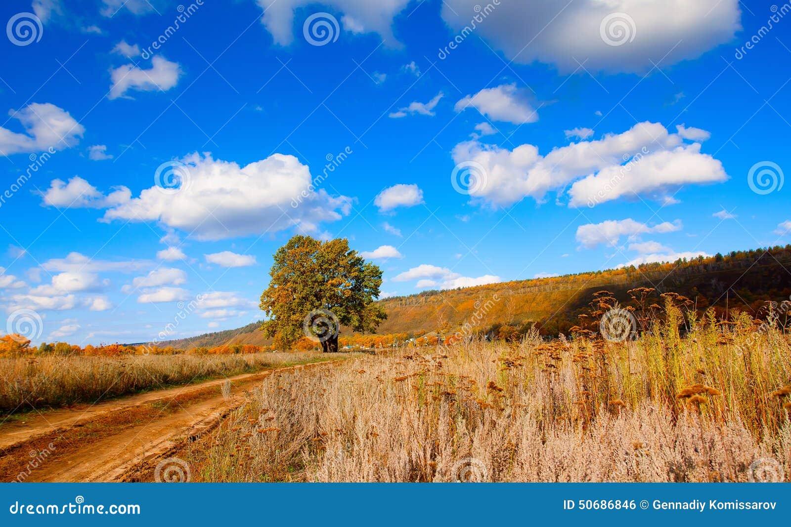 Download 9月 库存照片. 图片 包括有 黄色, 孤独, 方式, 的treadled, eventing, 结构树 - 50686846