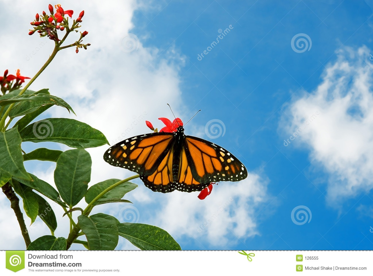9 a butterfly