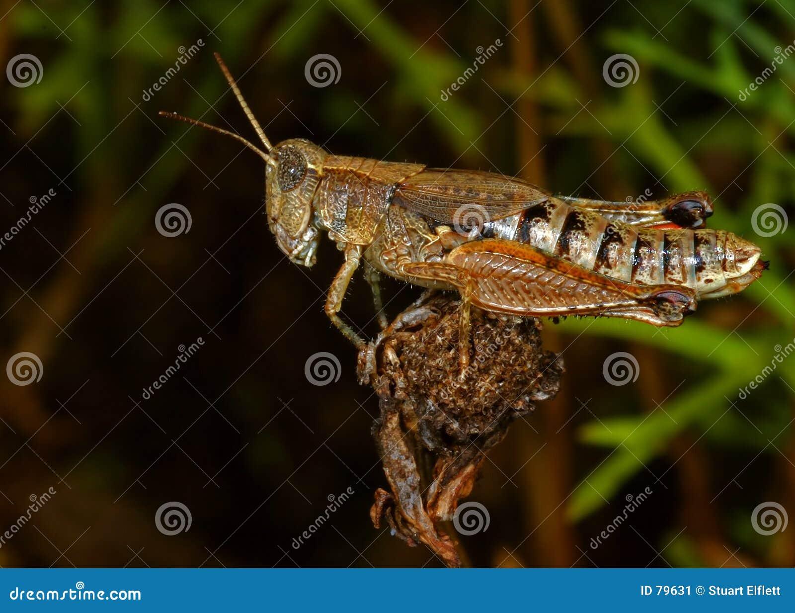 Aaaaah grasshopper