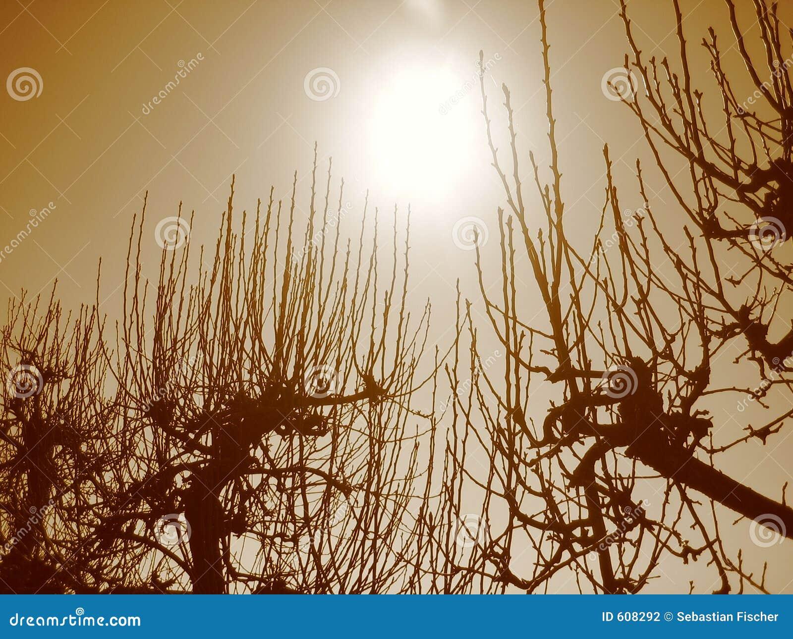 Aan de zon