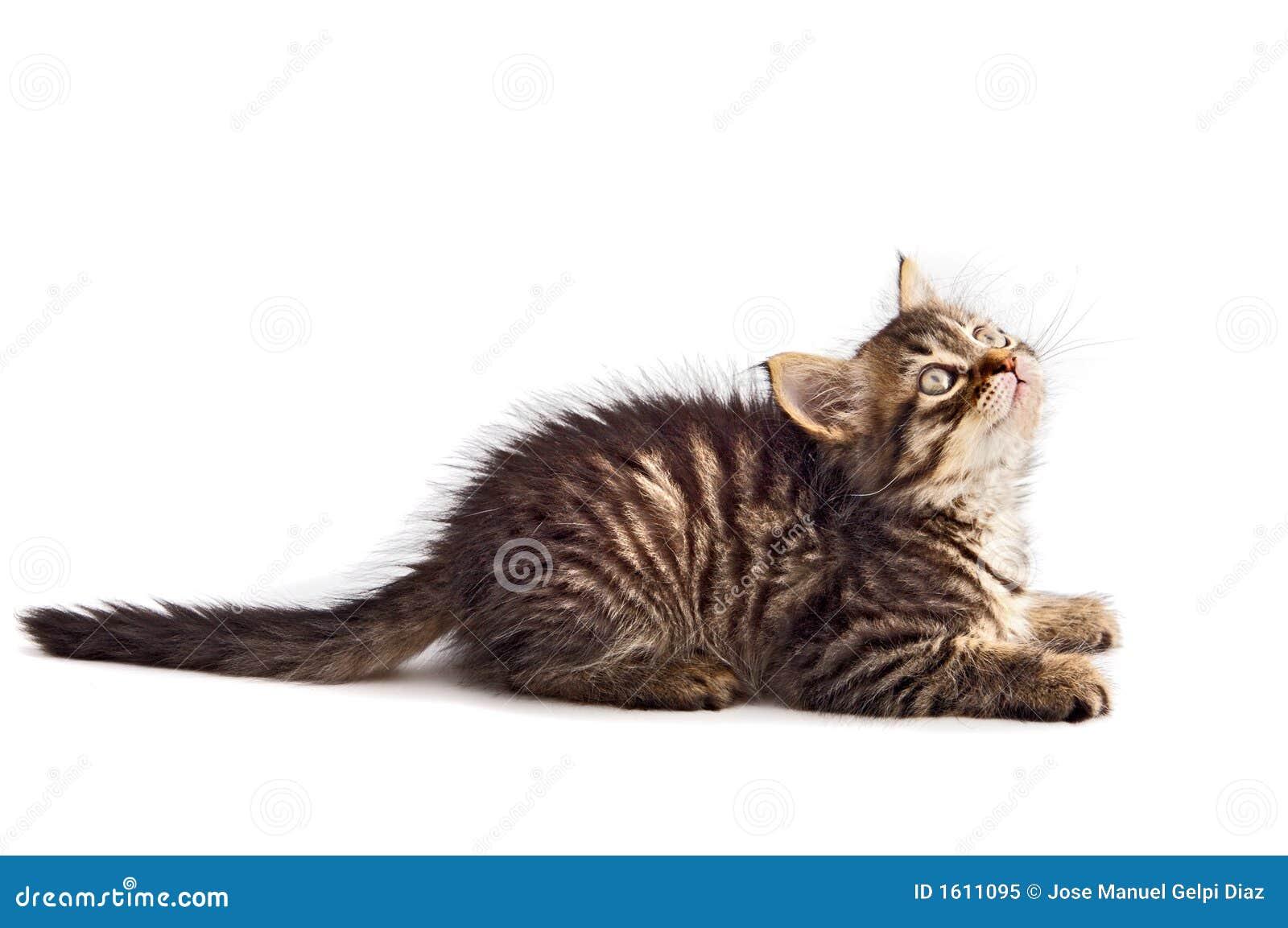 Aanbiddelijke kat