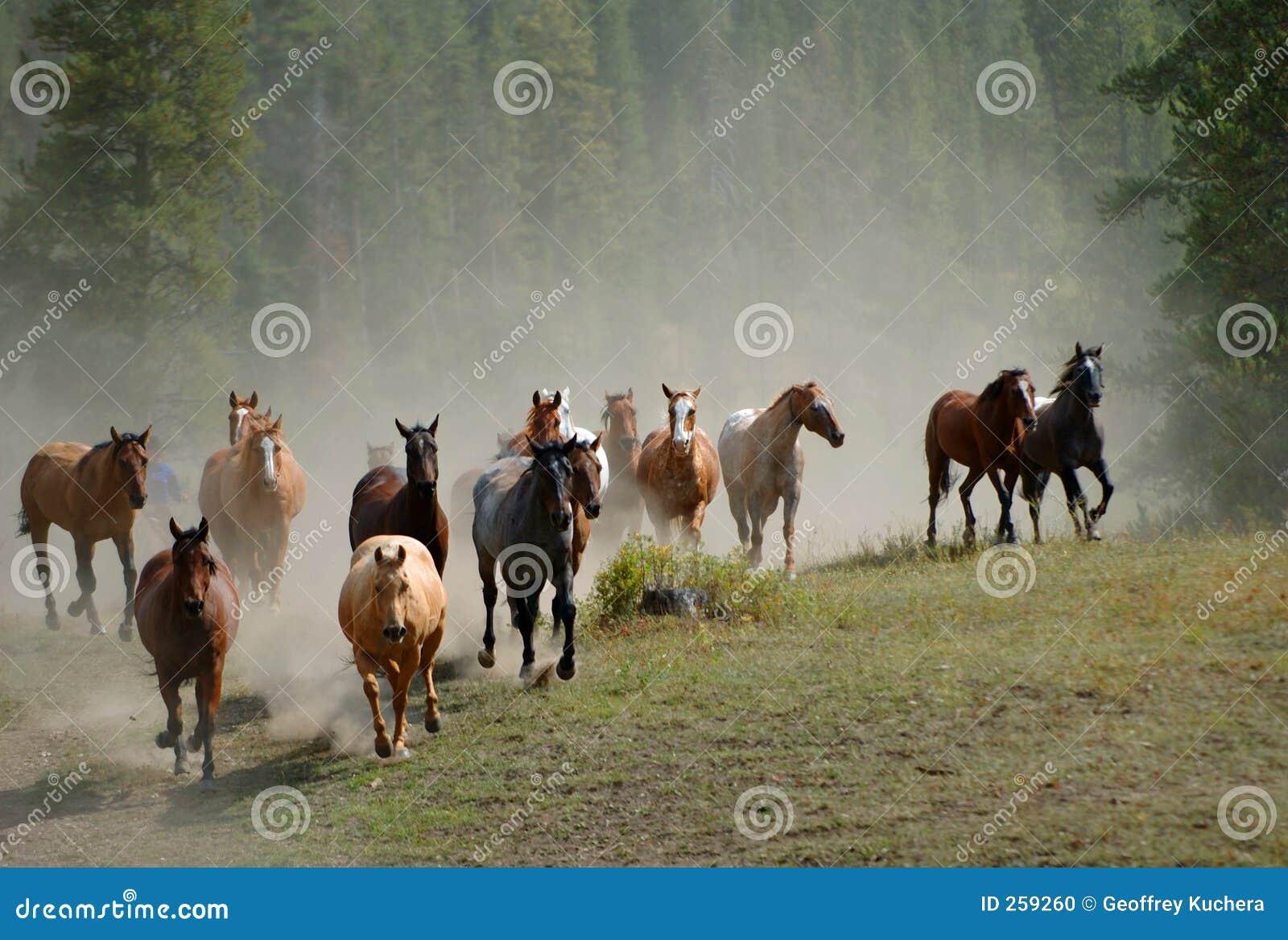 Aandrijving 2 van het paard