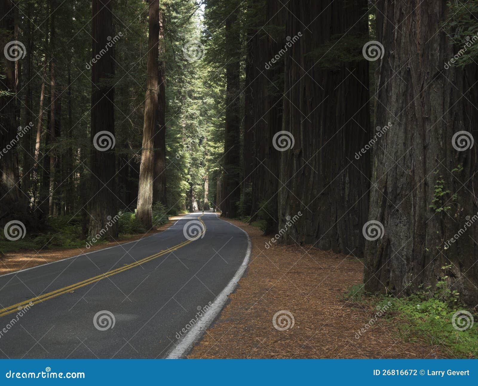 Aandrijving door de Californische sequoia s van Californië