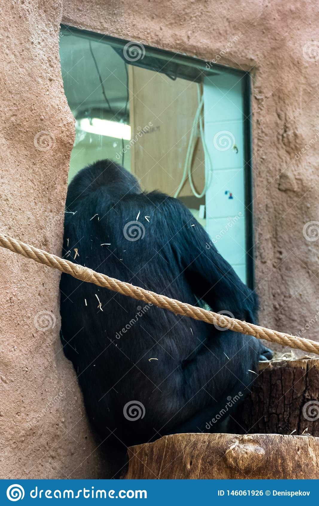 Aap bij de dierentuin