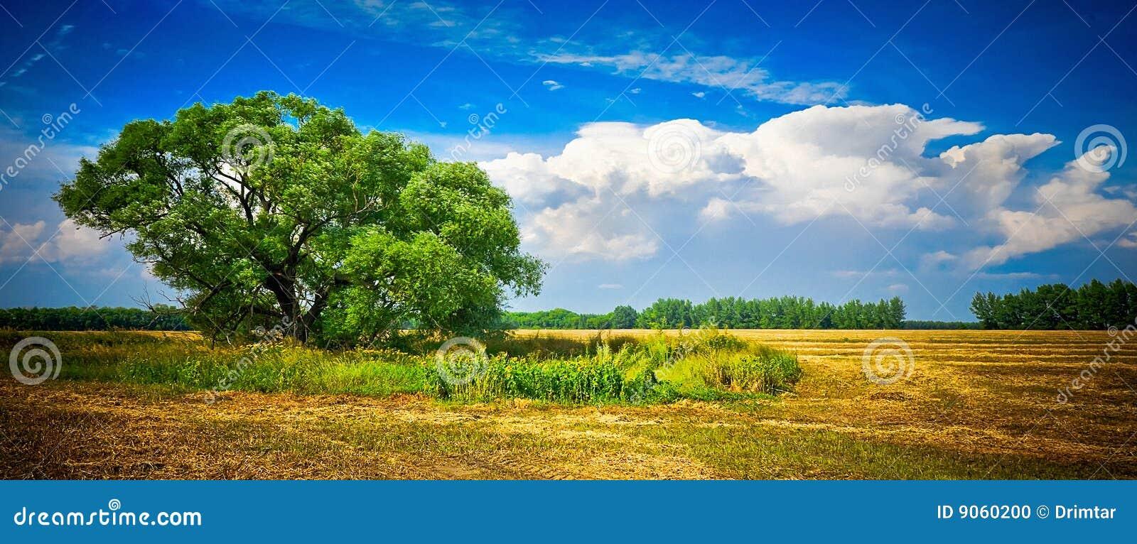 De grote boom op het gebied, een de zomerlandschap