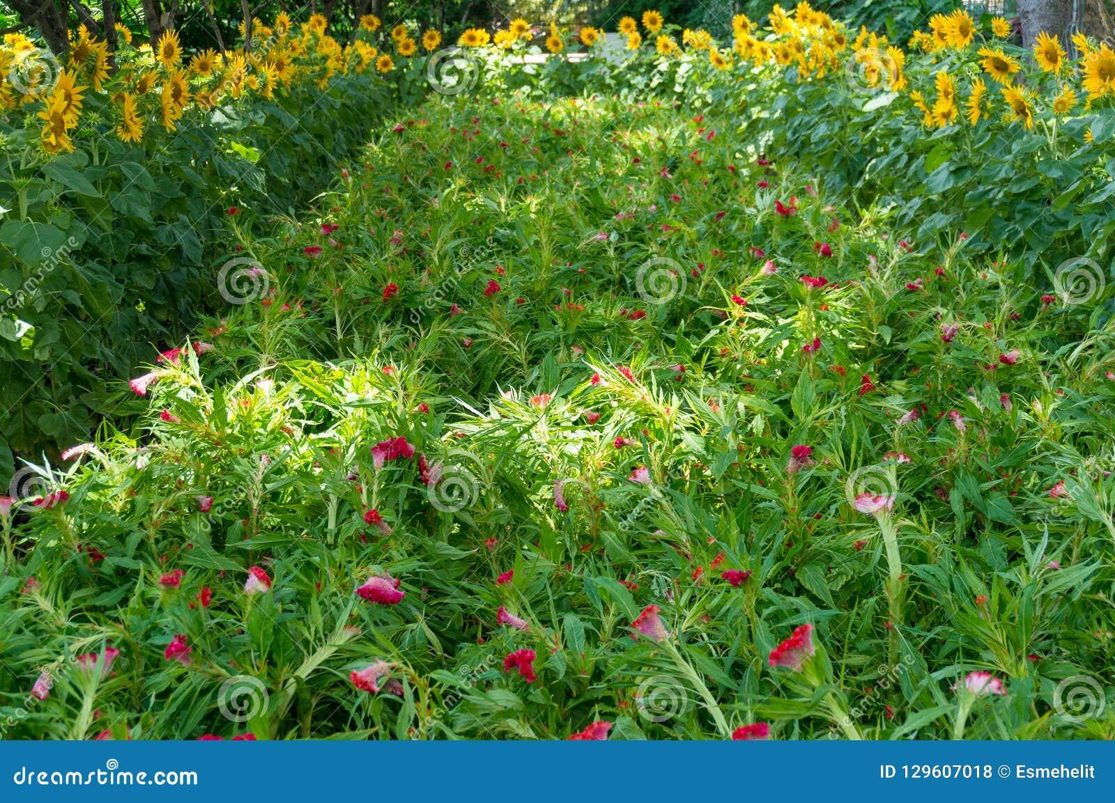Aard bloemenachtergrond van weelderige groene bladeren en exotische rode flo