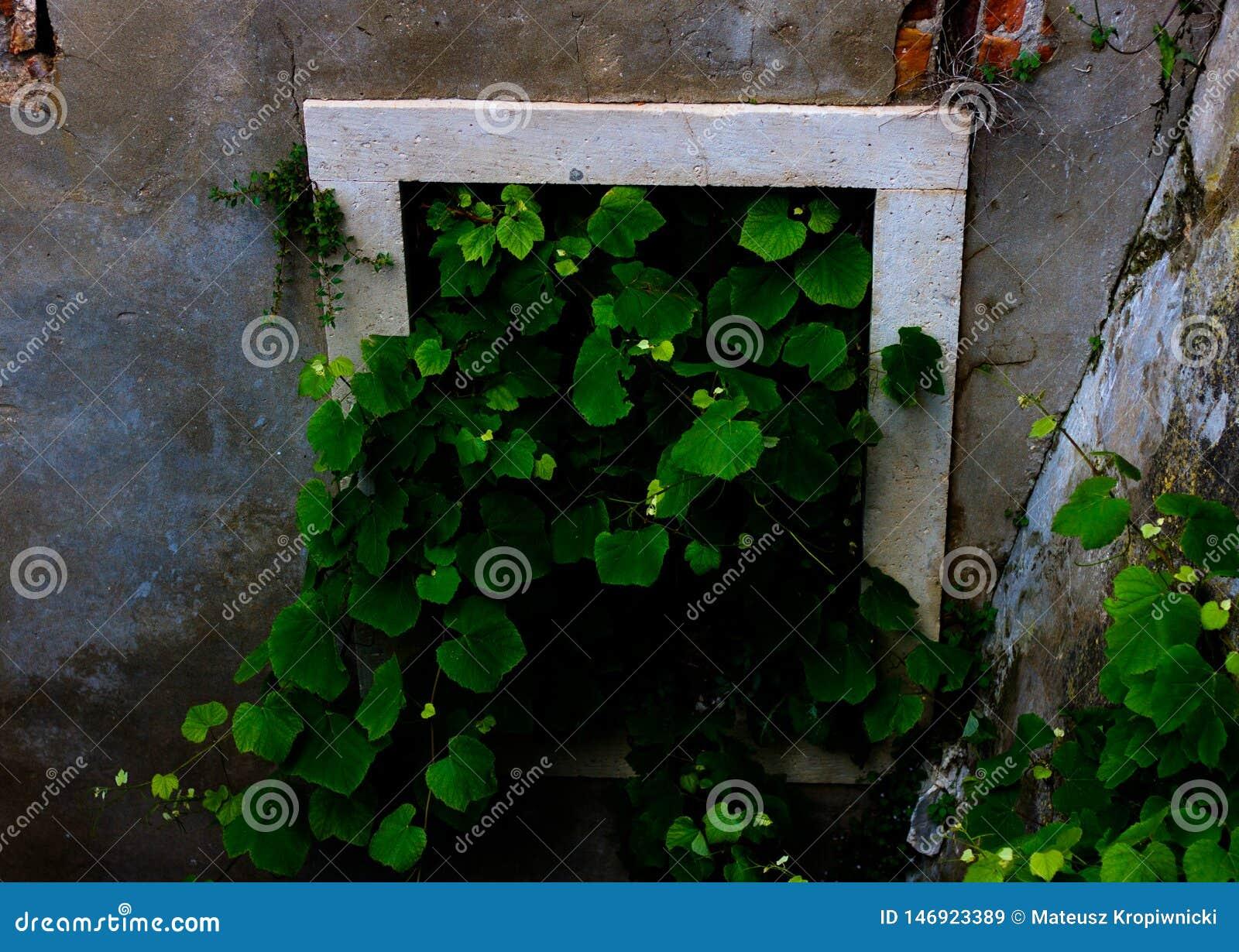 Aard die venster in de oude bouw overnemen