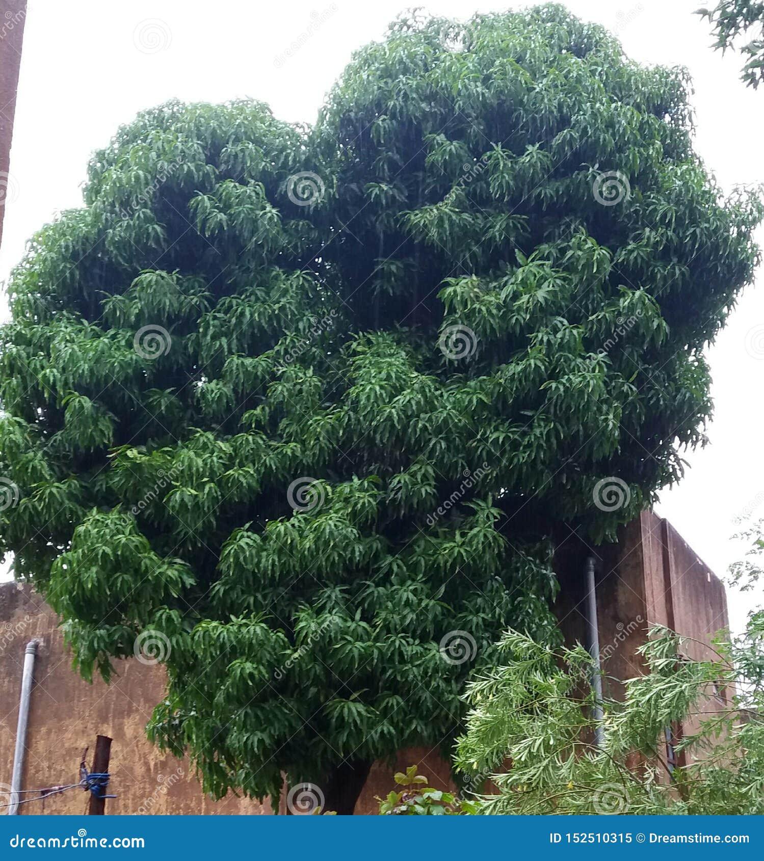 Aardinstallaties en bomen