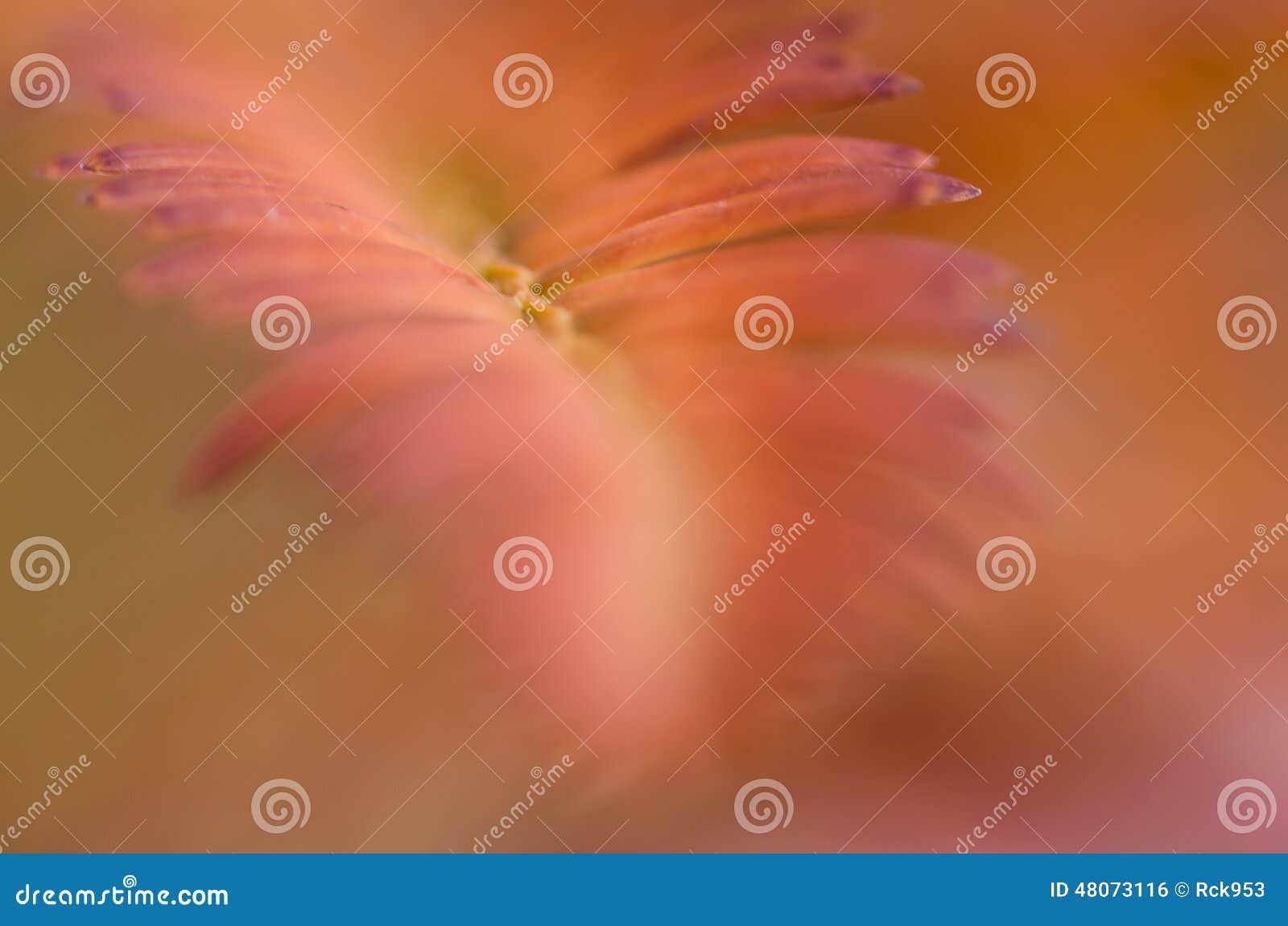 Aardsamenvatting - Zacht Onduidelijk beeld van Autumn Color