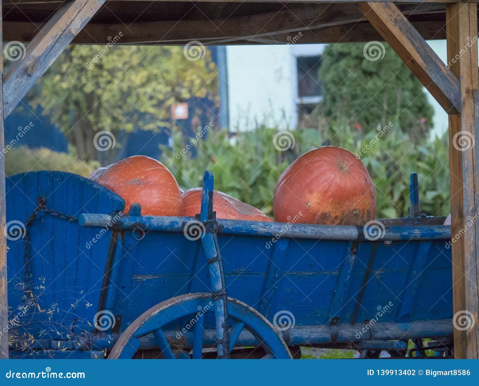 Abóboras no vagão velho azul com roda de madeira