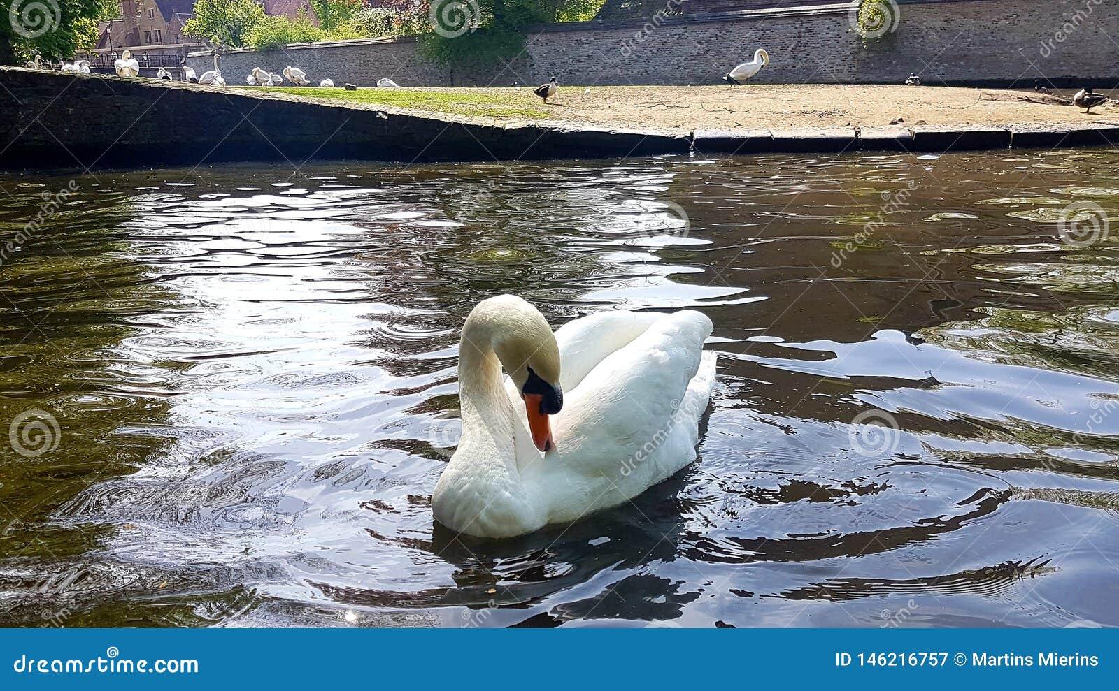 ?ab?d? w jeziorze