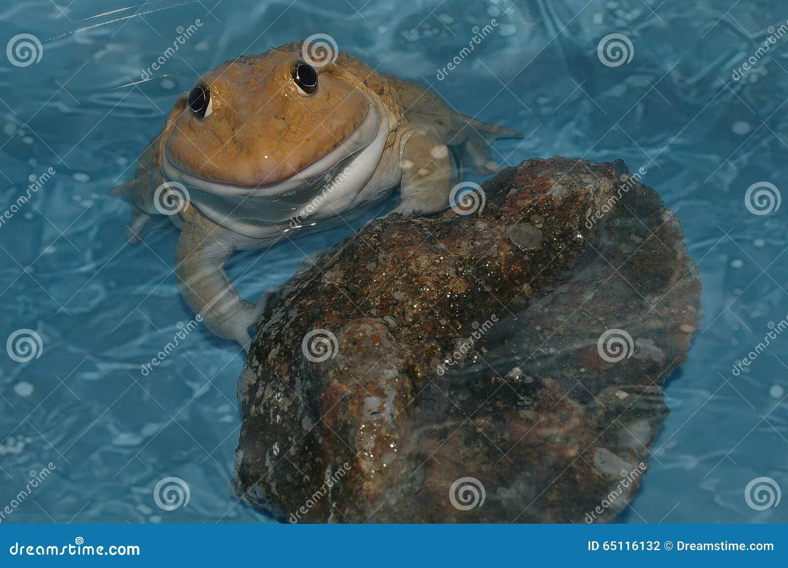 Żaba na wodzie