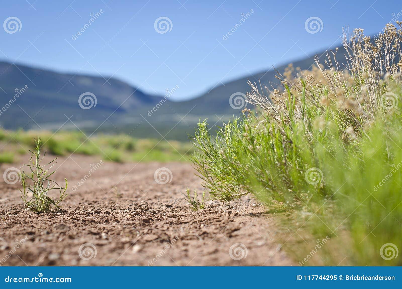 Abajo en la suciedad del camino de tierra