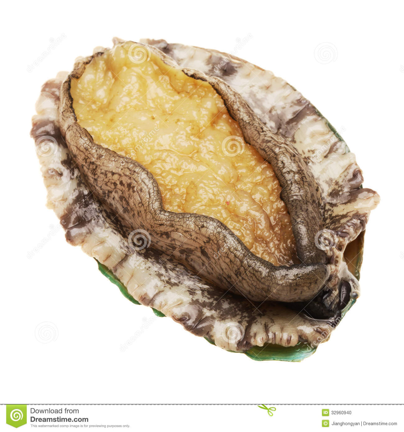Abalone Stock Photo - Image: 32960940