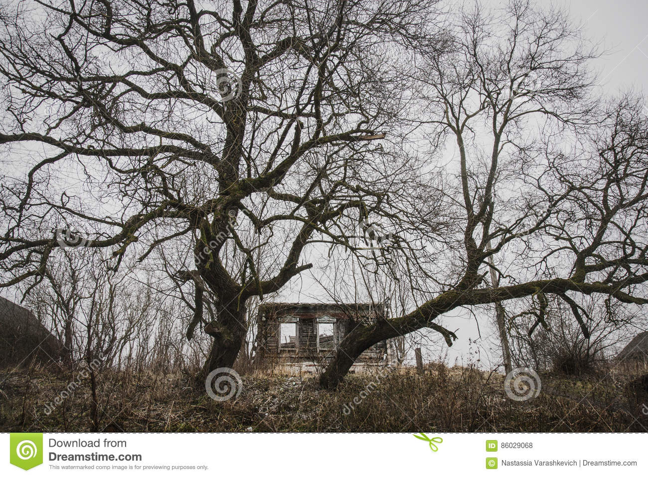 abandoned and broken down house guarded by two huge trees stock