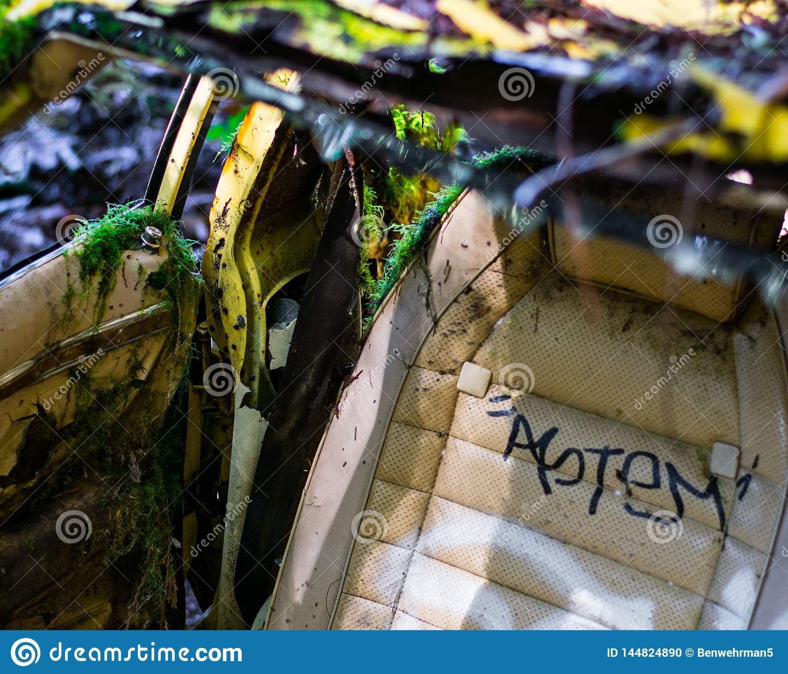 Abandoned Car in Forest Overgrowth