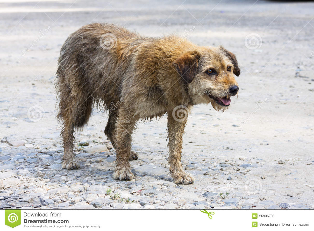 Abandoned Dog Stock Photos - Image: 26936783