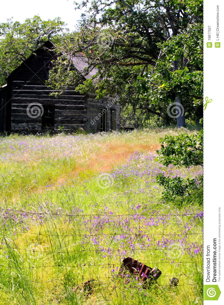 Abandoned Homestead Cabin in field of Wild Flowers