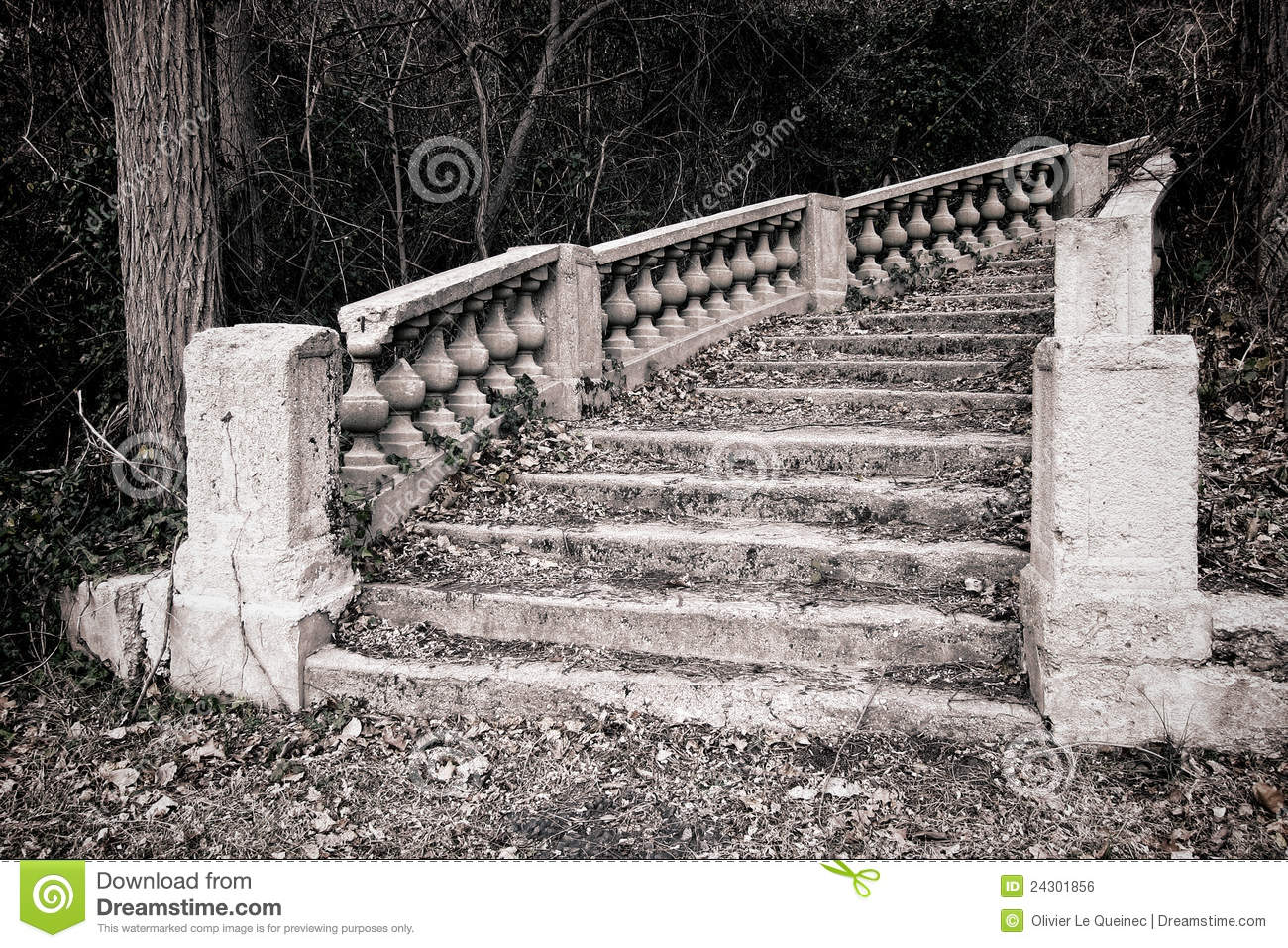 Abandoned Monumental Staircase in Overgrown Woods