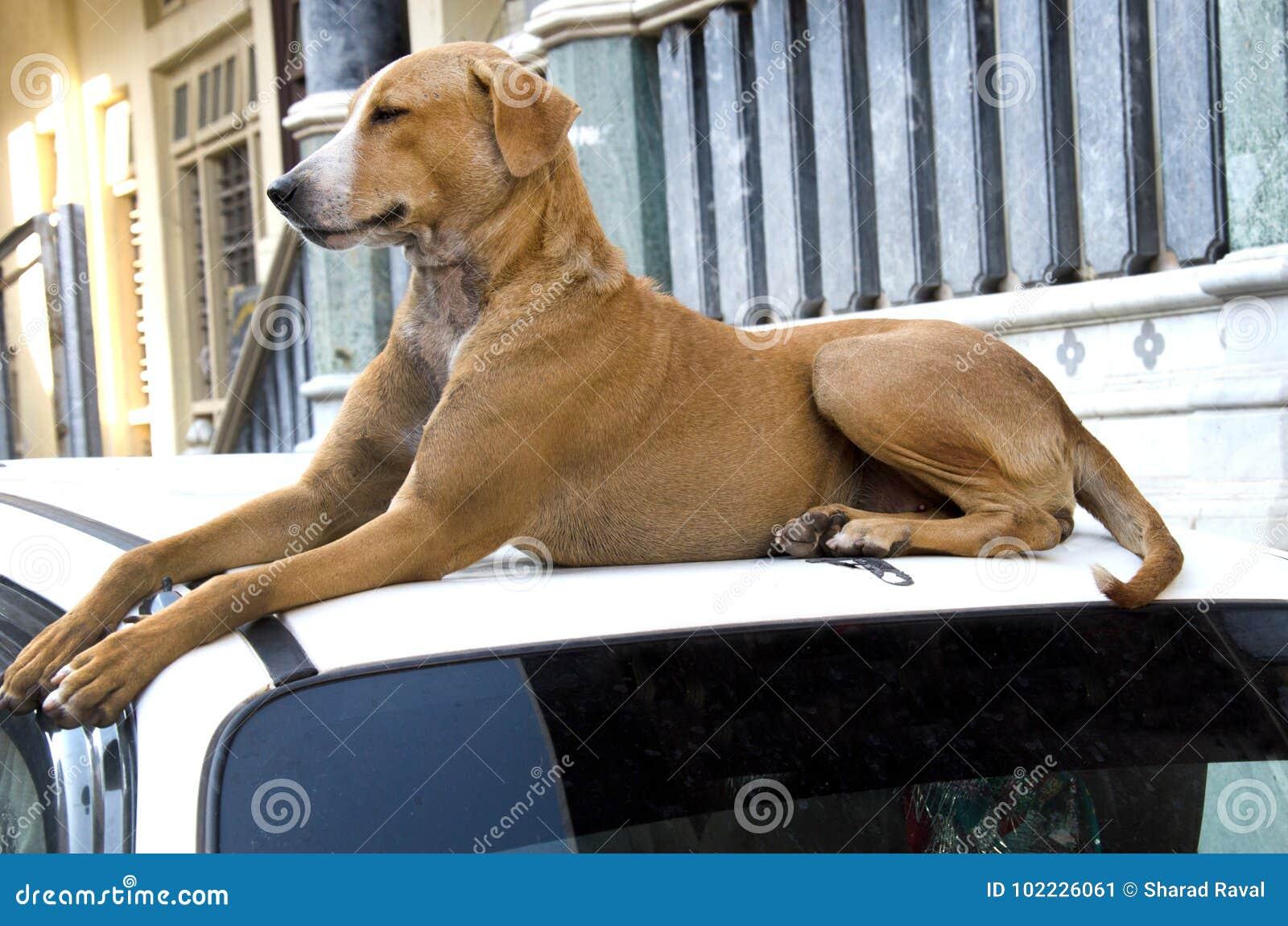 Abandoned street dog