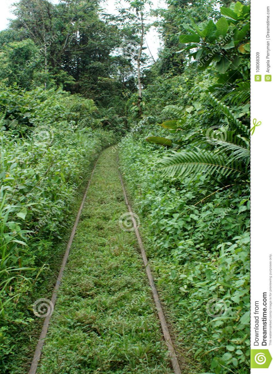 Abandoned Train Tracks In The Jungle Stock Image - Image of