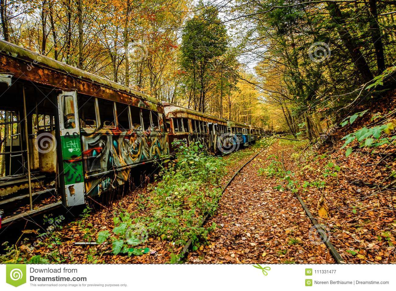 Abandoned Trolley Cars In Fall With Rails In Woods Stock Image