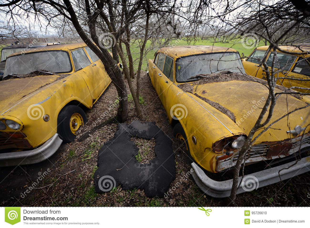 Abandoned Yellow Cabs, Lockhart, Texas Stock Photo - Image of