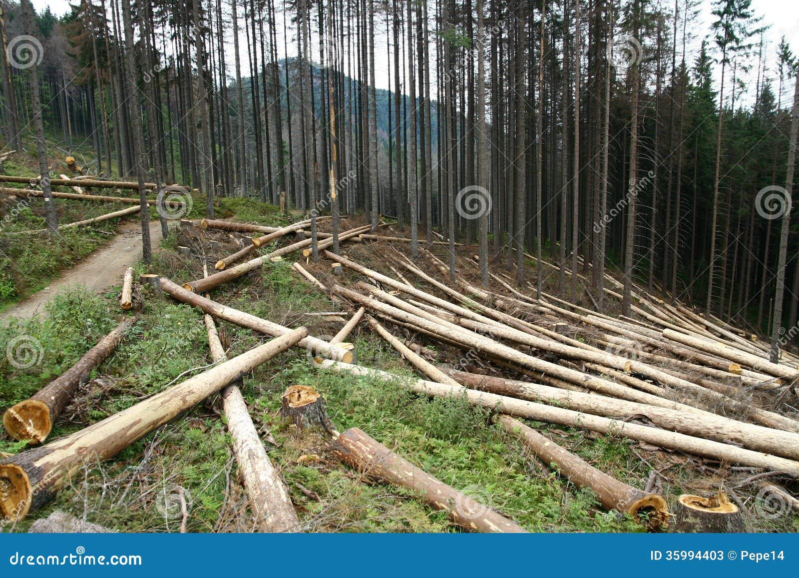 abattage du bois image stock image du slash bois coupure 35994403. Black Bedroom Furniture Sets. Home Design Ideas