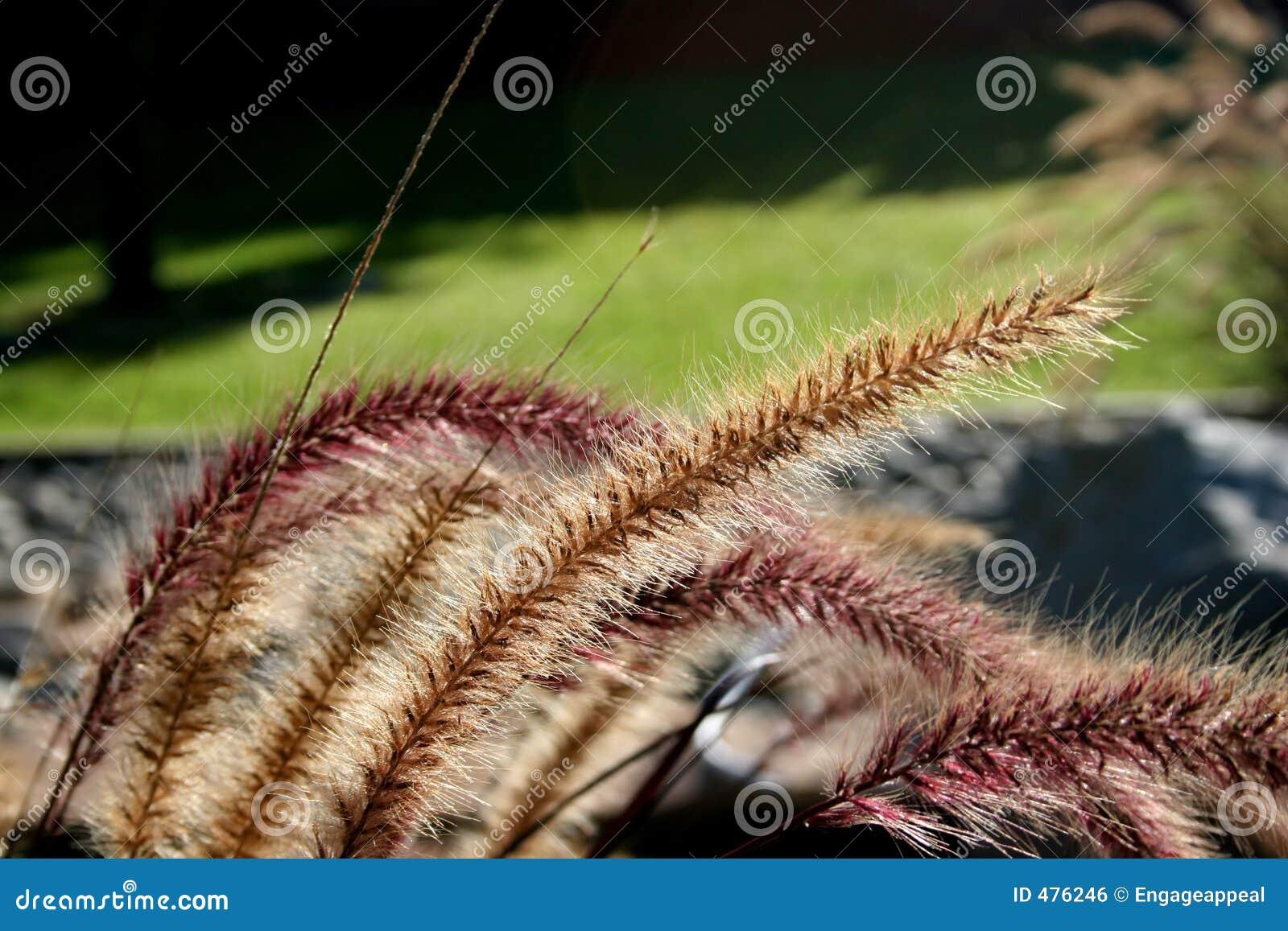Abbellimento delle piante dello stagno immagine stock for Piante da stagno