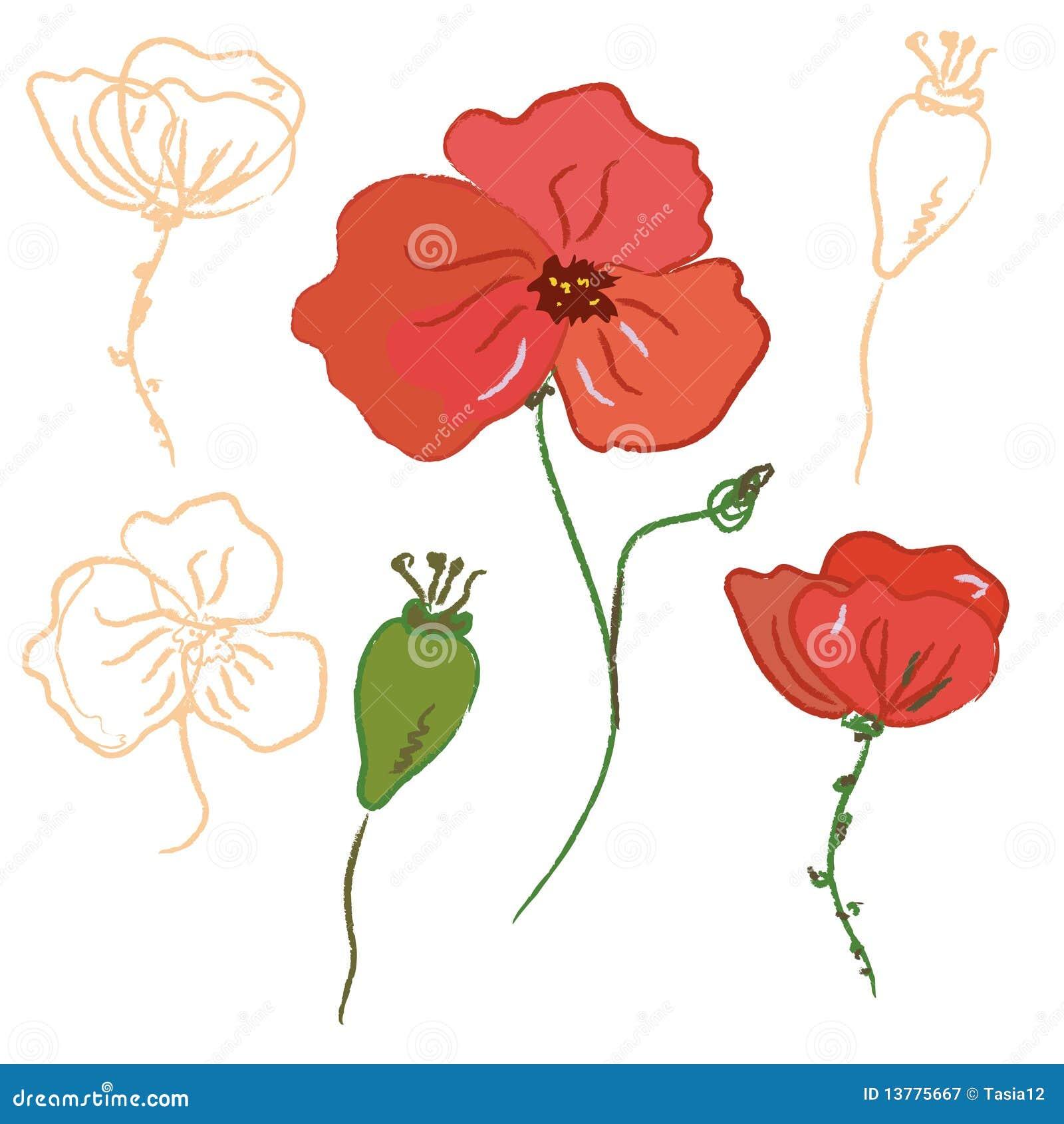 Abbozzo del fiore del papavero