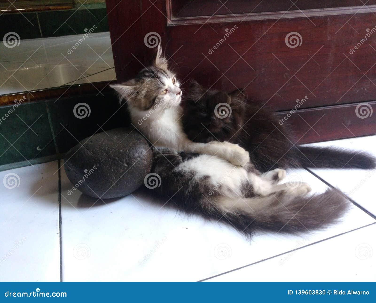 Abbracciare in bianco e nero del gattino sveglio