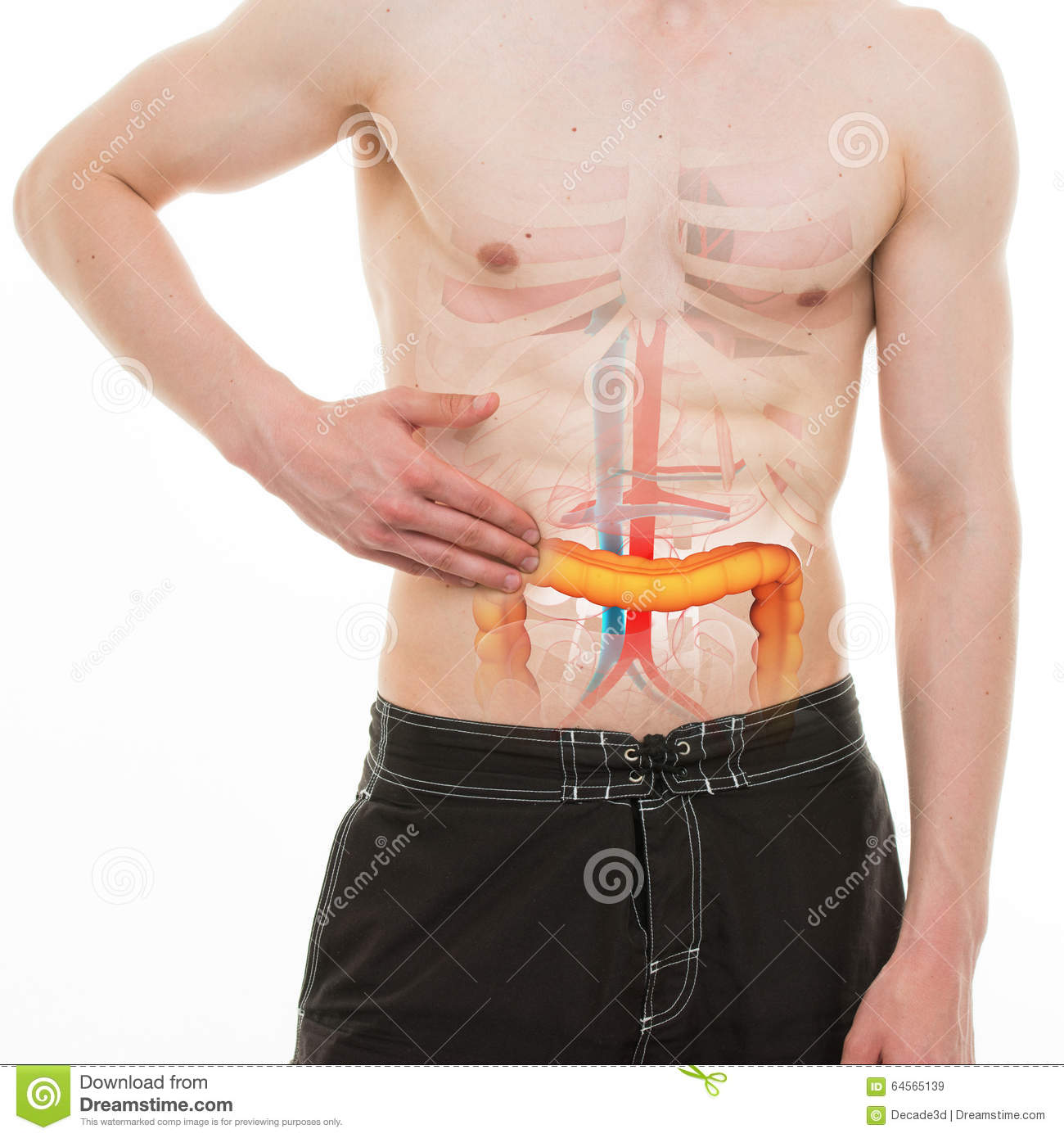 Abdominal Pain Colon Intestine Right Side Pain Real Anatomy
