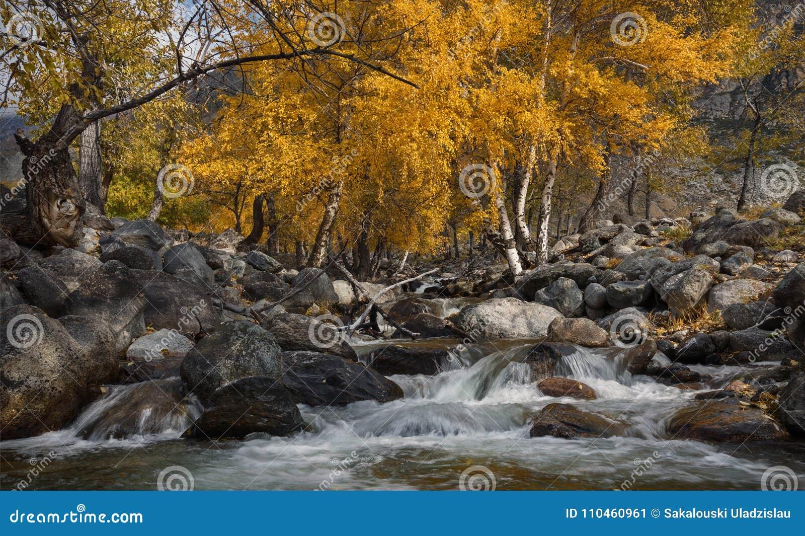 Abedules de Autumn Landscape With Several Yellow y cala fría Autumn Mountain Landscape With River y abedul Abedul en el banco de