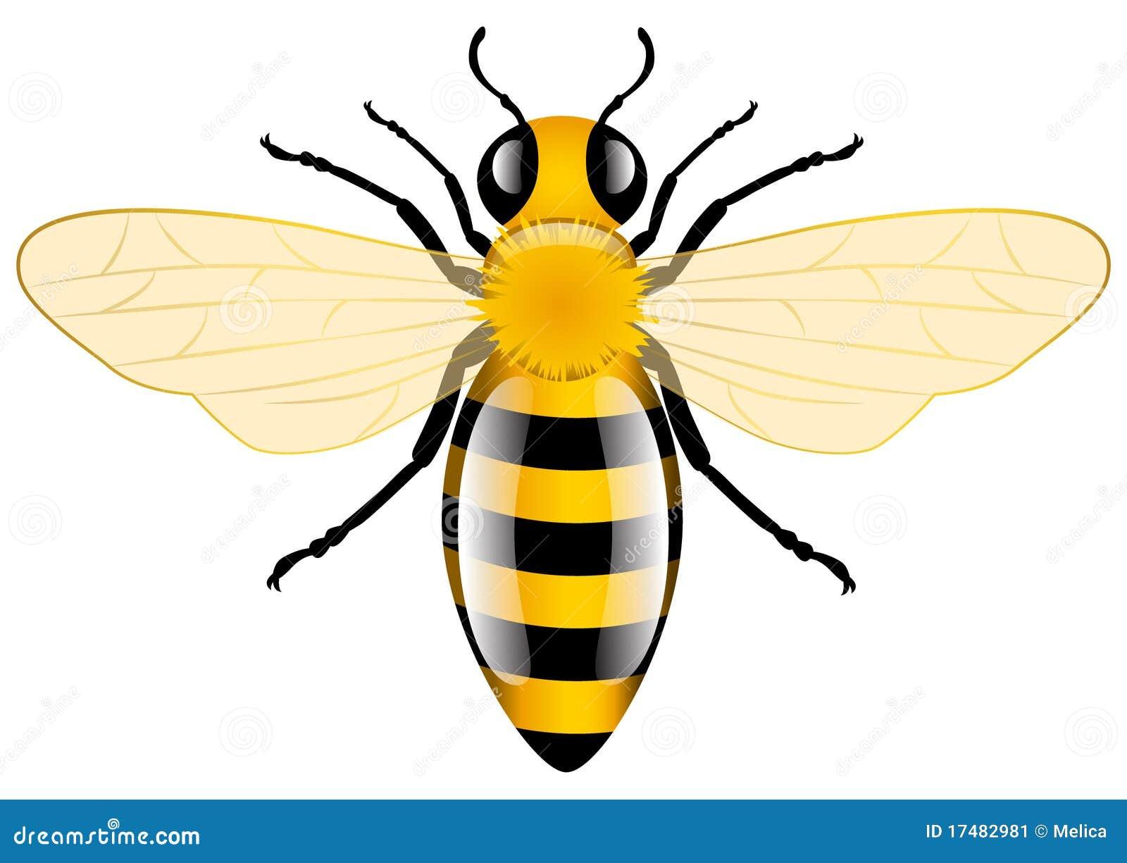 Abeille de miel