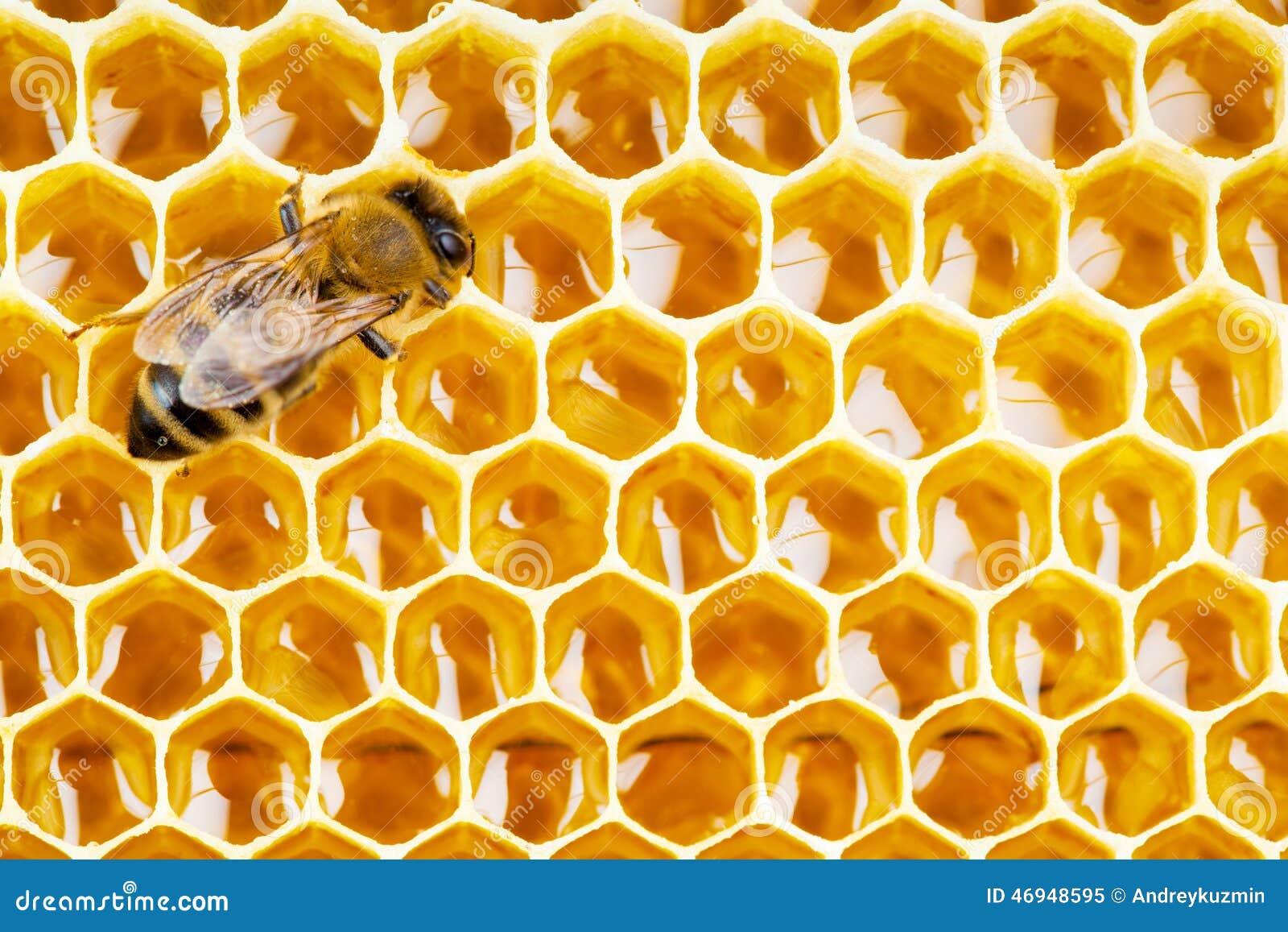 Abeille de travail sur des cellules de nid d abeilles