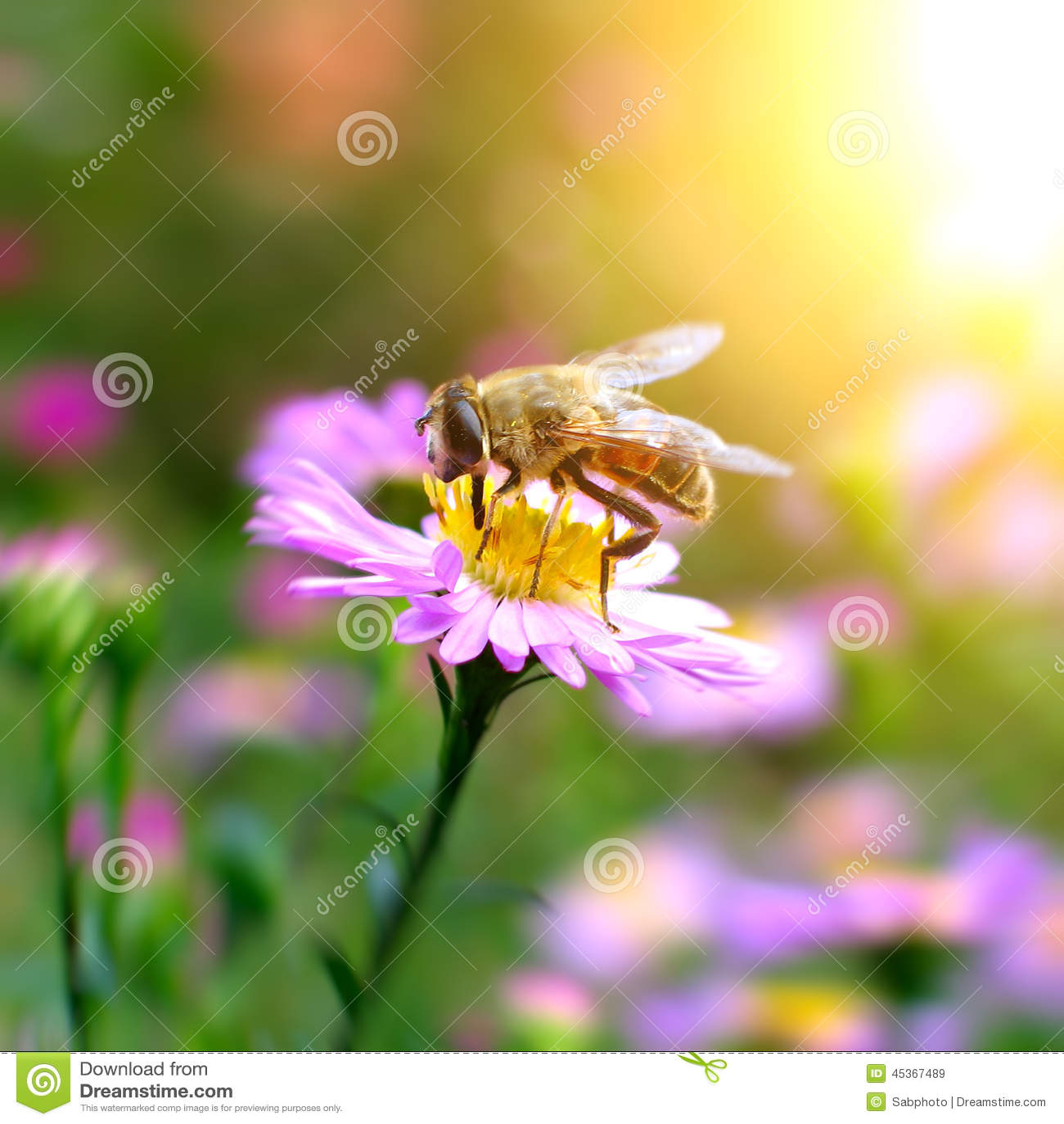 Abeille sur la fleur