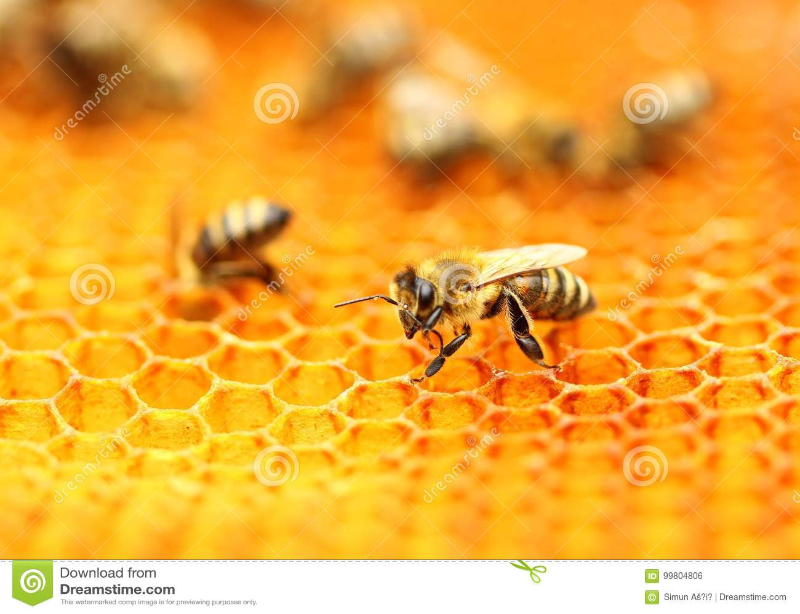 Abeilles sur le nid d abeilles