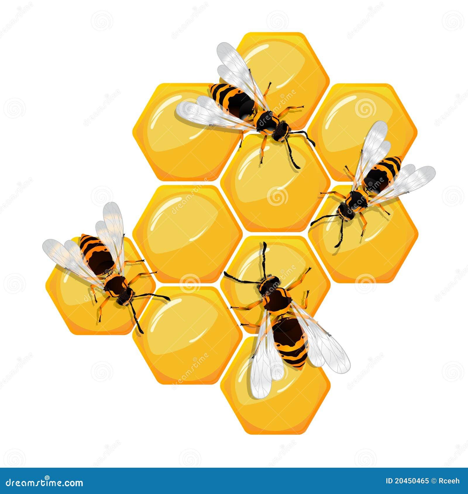 abeilles sur un nid d 39 abeilles illustration de vecteur illustration du sain m decine 20450465. Black Bedroom Furniture Sets. Home Design Ideas