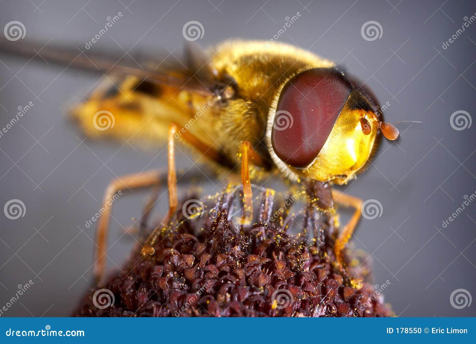 Abeja de la miel