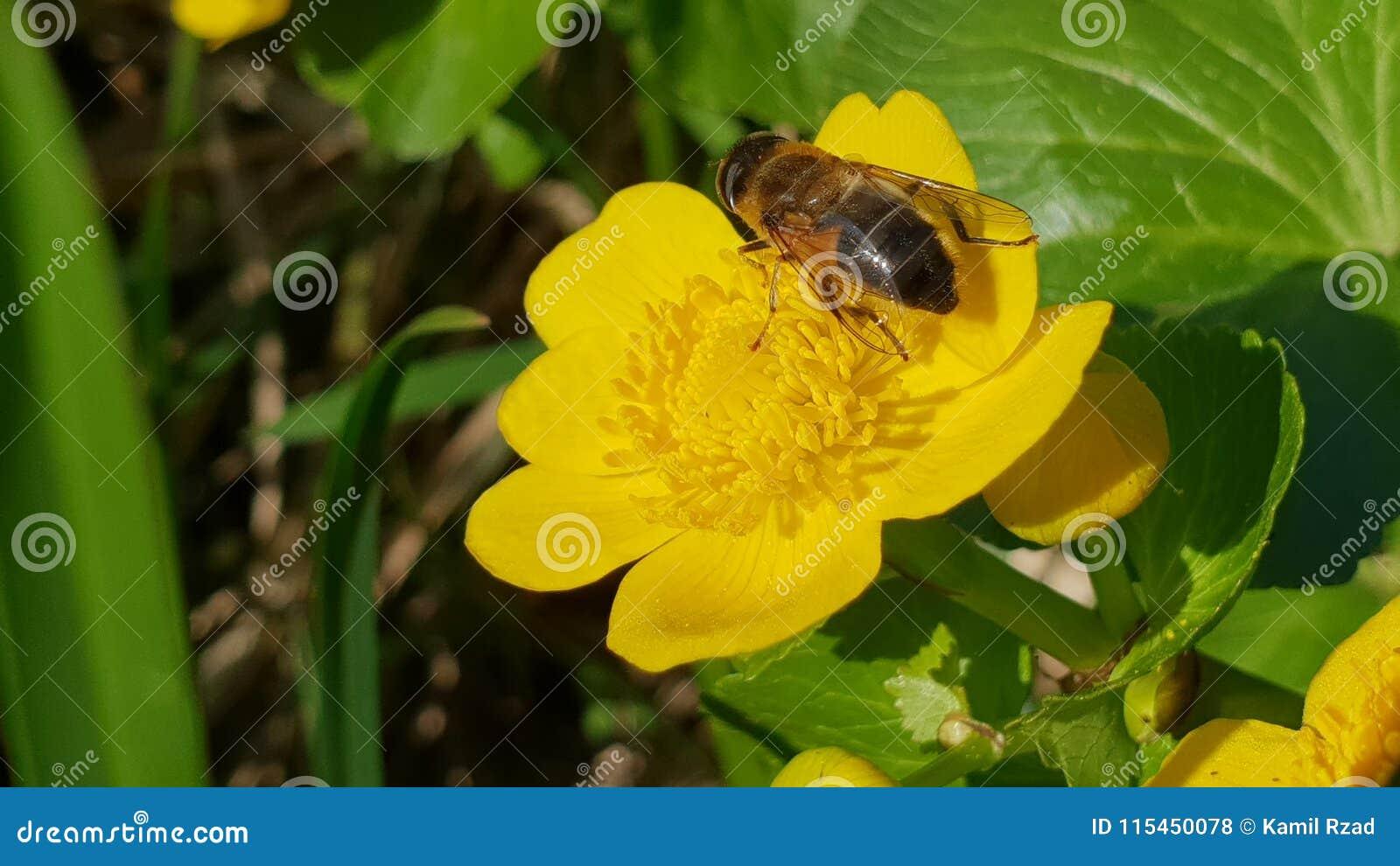 Abeja en la flor